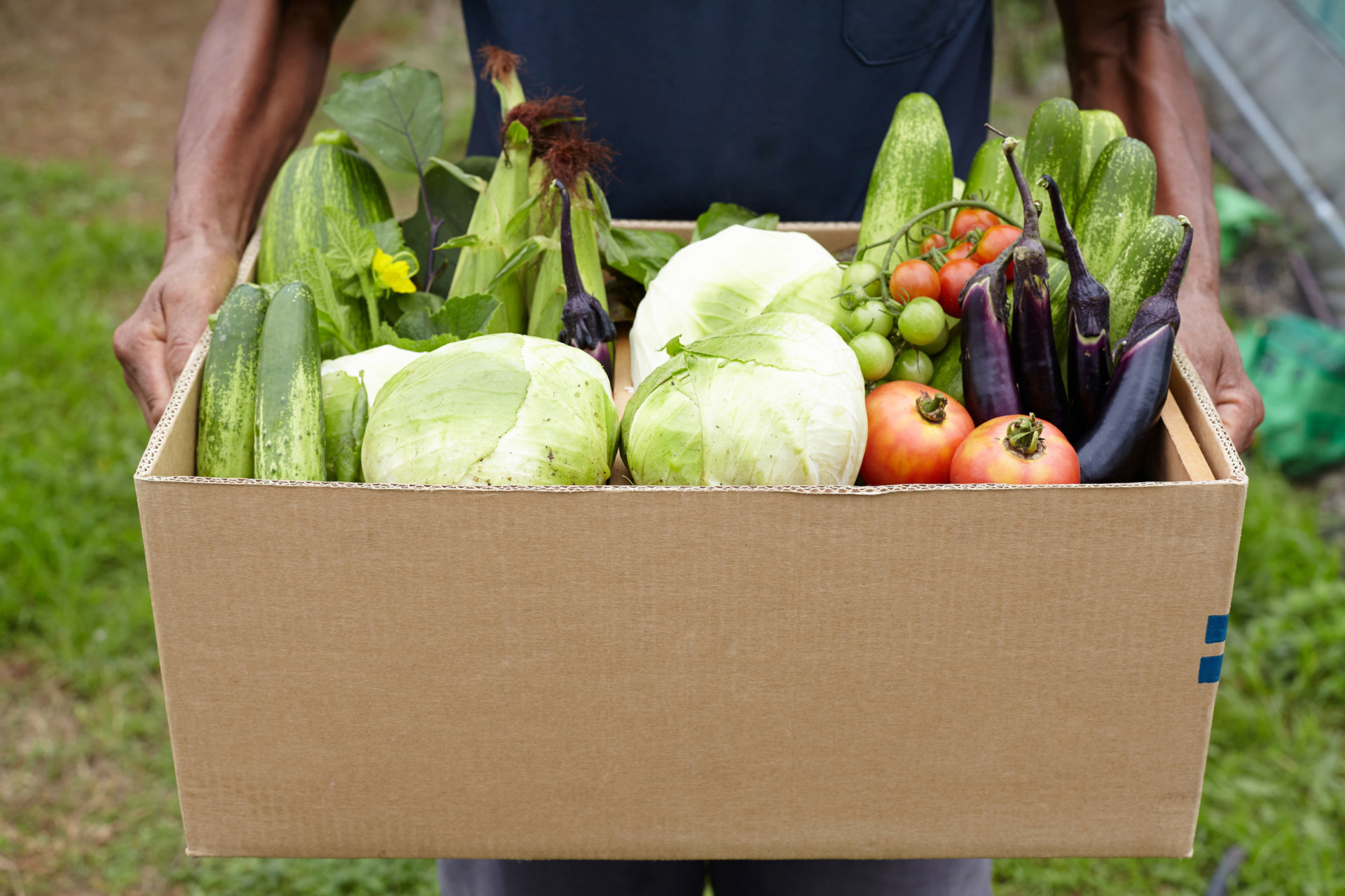 box filled fresh vegetables - community food drive